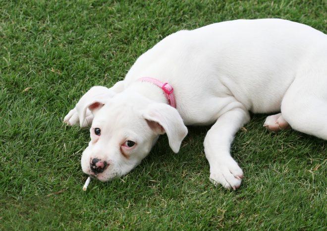 Meeroken huisdieren - Stichting Stop Bewust